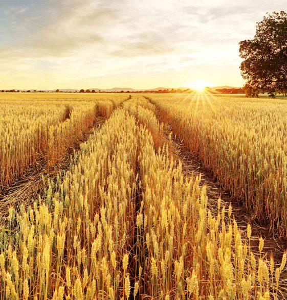 https://dpok.com/wp-content/uploads/2019/04/DPOK-Kansas-Rural-Partnerships-CDDOS.jpg